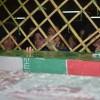 گرامیداشت سومین روز خاکسپاری شهدای غواص در بهشهر برگزار میشود